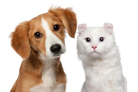 dog-cat-121299054