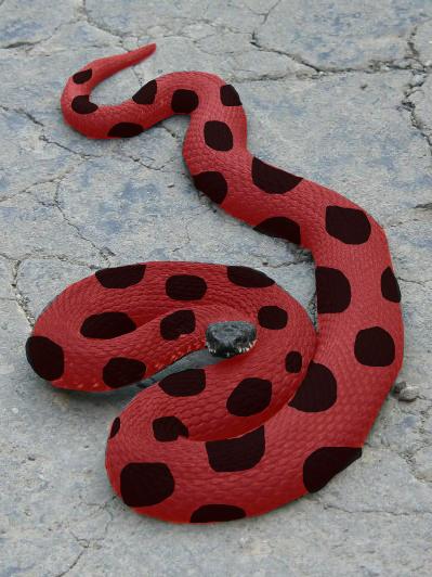 Käärmekerttu